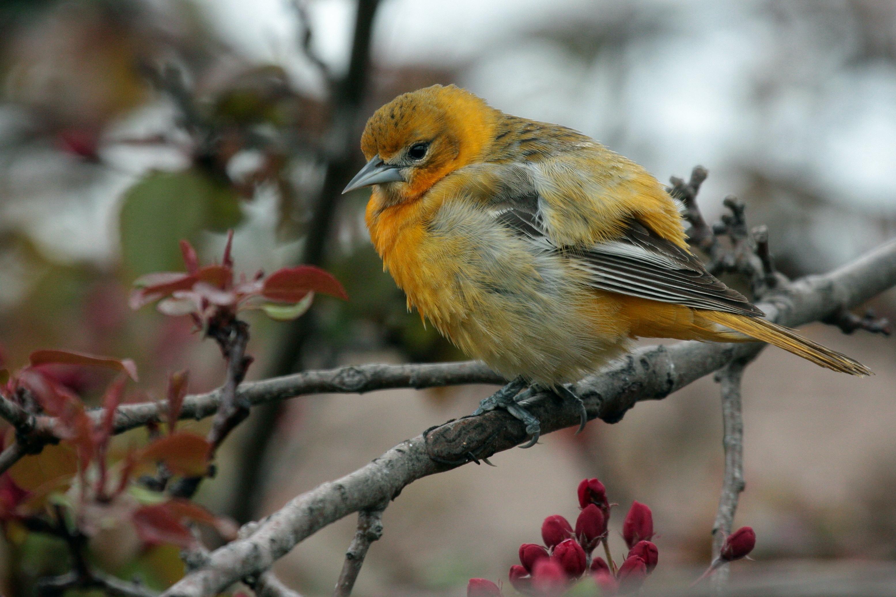 feeding birds archives birds calgary