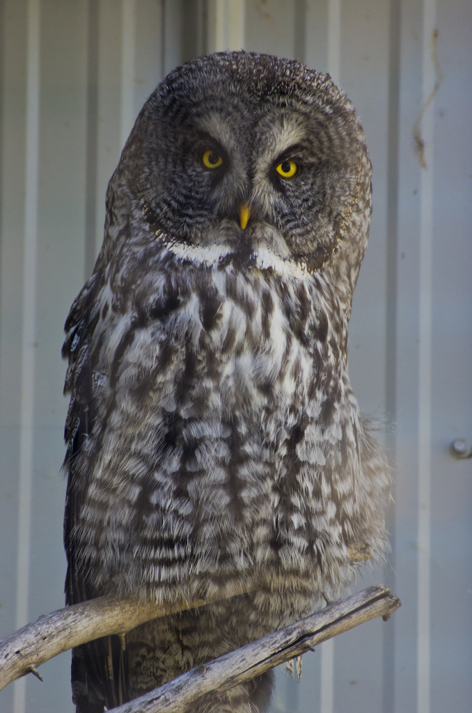 owl types and images