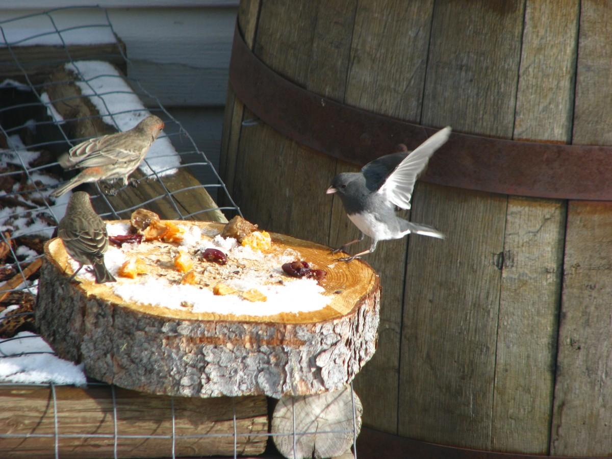 What Kind Of Food Do Sparrows Eat