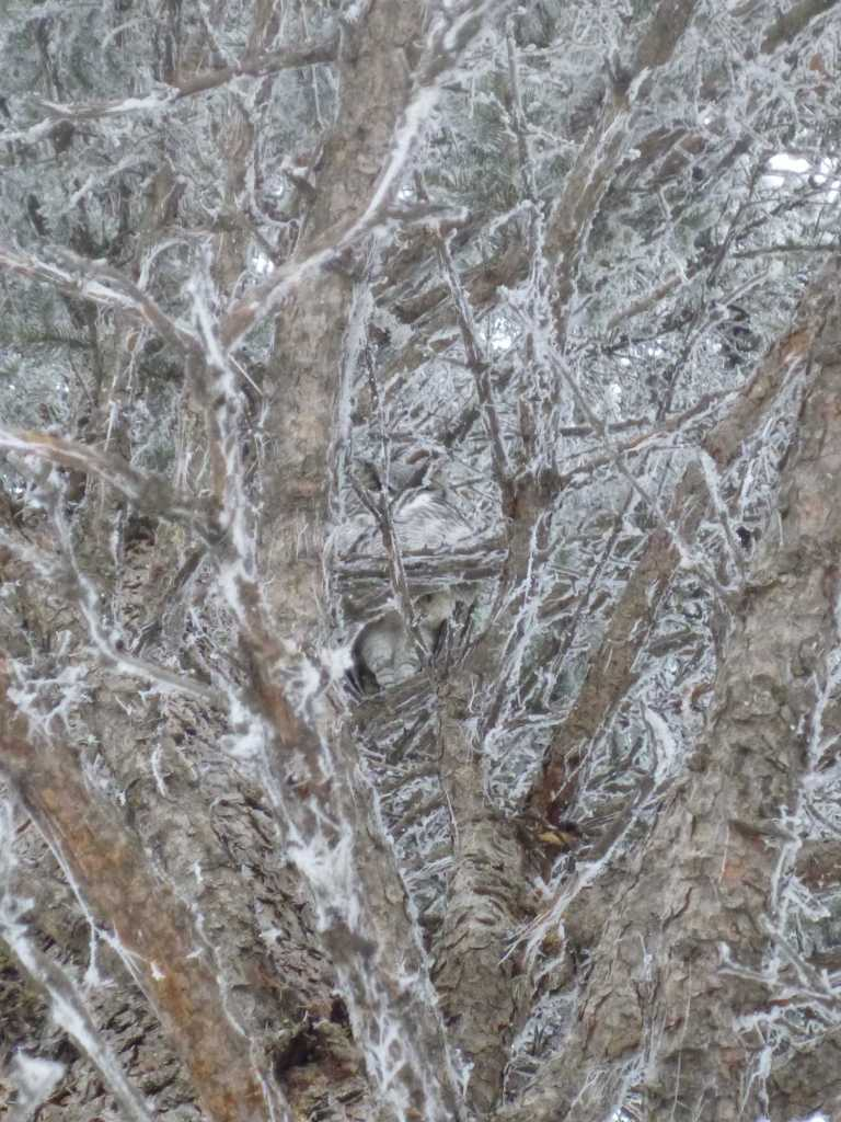 There is an owl in this picture, I swear.