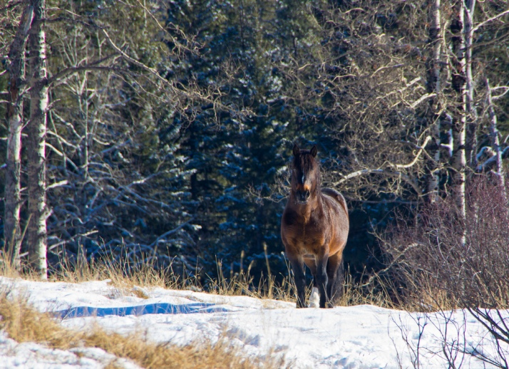 Sentry stallion