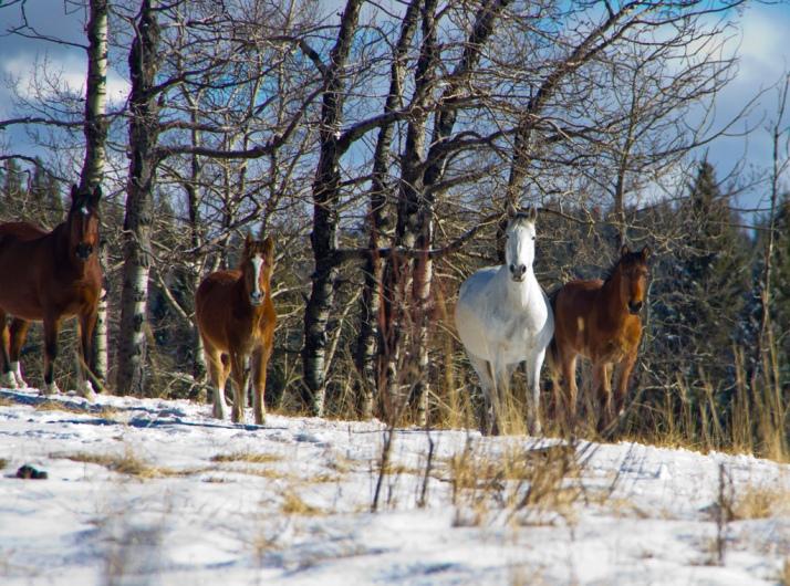 Mares of Herd 3
