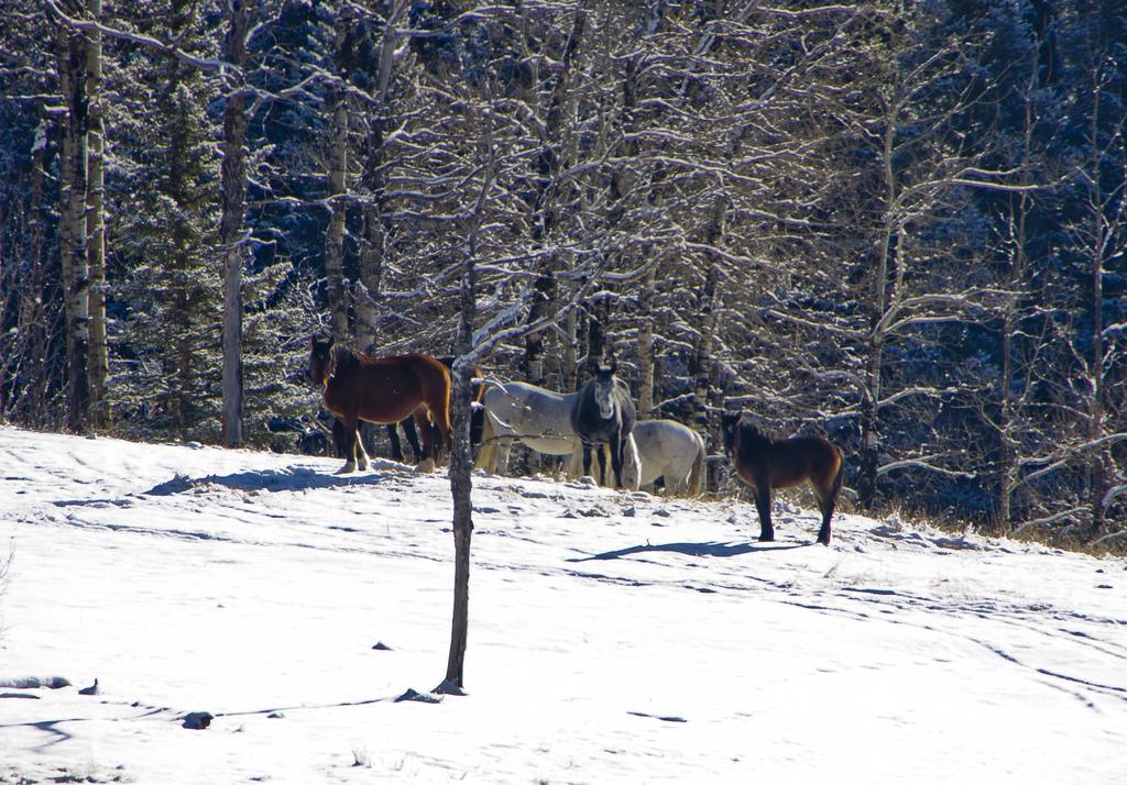 First herd