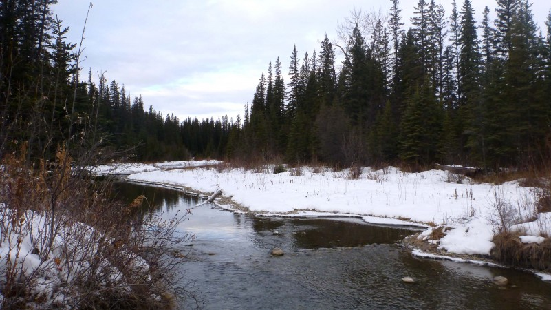 Elbow River through Griffith Woods
