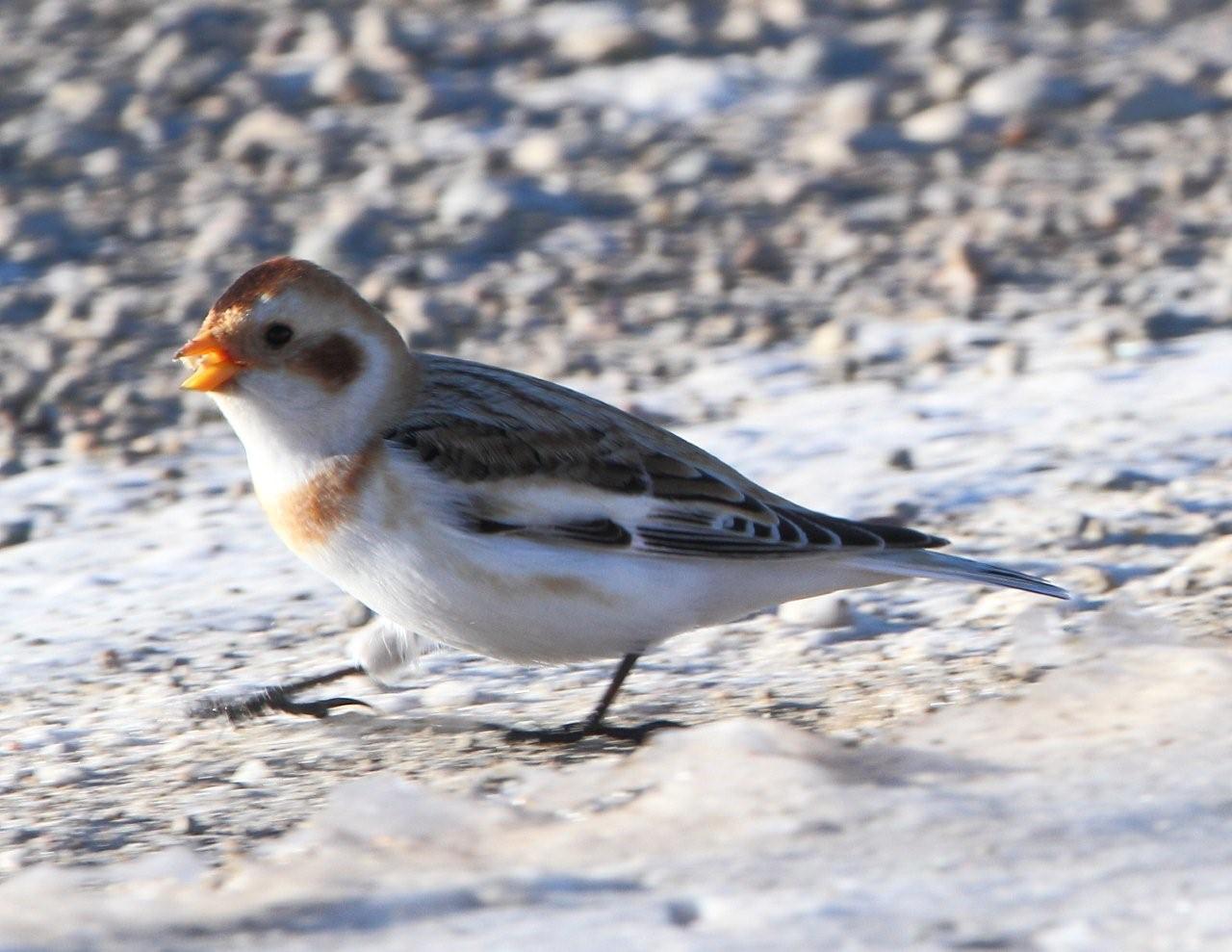 Winter Birds In Alberta